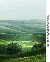 hügelig, landschaftsbild, von, toscana, in, der, nebel
