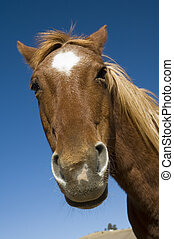 hülye, látszó, ló
