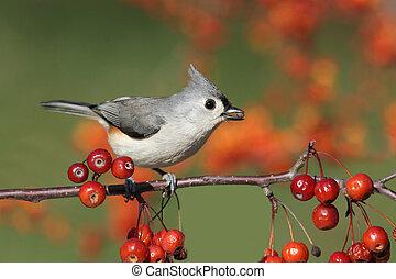 hřad, višně, ptáček