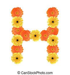 h, alfabeto, flor, criado