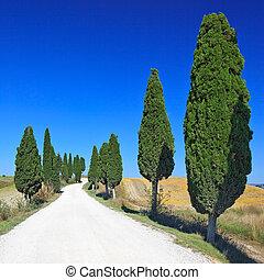 Hałasy, Włochy, cyprys,  Tuscany, Drzewa, Ziemia, Droga, Wiejski, kreta,  senesi, biały, Europa,  Siena, krajobraz