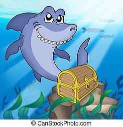 haai, met, schatkist