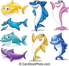 haaien, groep, kleurrijke