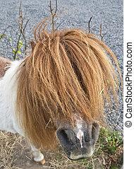haar, pony, langer