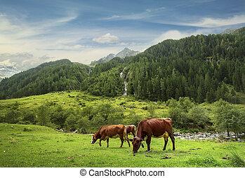 habachtal, les, élevé, tauern, parc national
