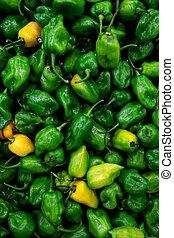 Habanero chili hottest pepper in the world