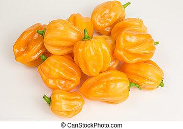 habanero chili pepper - chili pepper habaneros which are ...