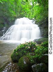"""habenaria, rhodochela, fiore, davanti, """"mun, daeng"""", cascata"""