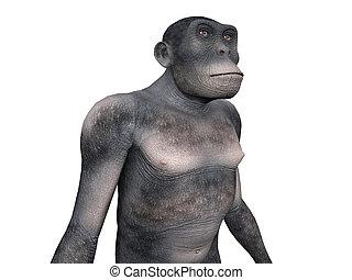 habilis, évolution, homo, -, humain