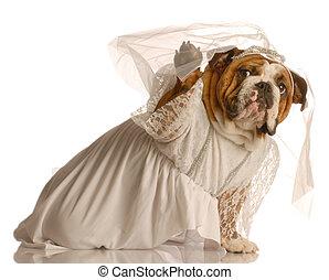 habillé, chien, mariée