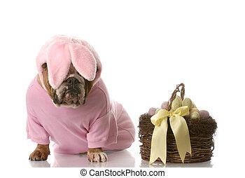 habillé, lapin, paques, chien, haut
