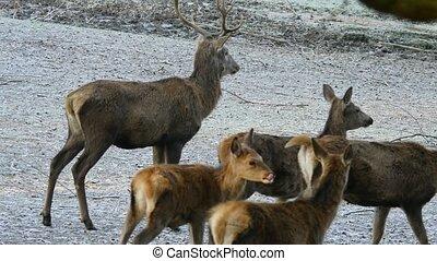 habitat, nature, tchèque, vigoureux, cerf, matin, automne, republic., ornière, pendant, froid, rouges