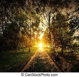 hacia, de madera, otoño, park., otoño, trayectoria, sol