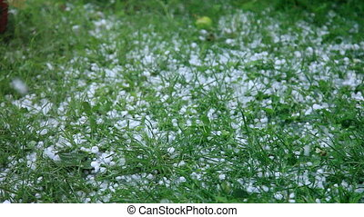 Hail storm - Hails falling on the grass
