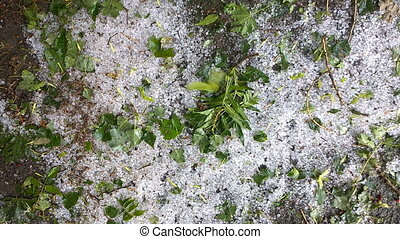 Hailstones And leaves. Nature background. - Close up of hail...