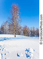 hain, espe, winter