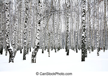 hain, winter, birke