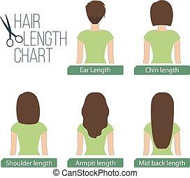 Hair length chart back view, 5 different hair lengths. ...