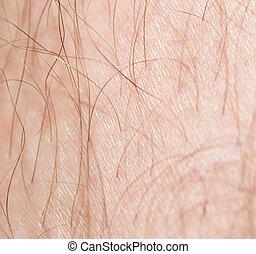 hair on the skin. macro