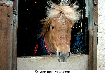 hairdo - pony with wind sweeping through it's mane