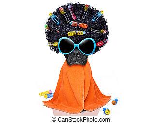 hairdresser groomer dog