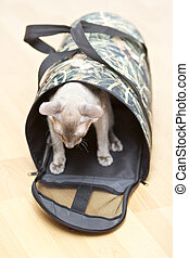 Hairless Cat in Carrier - cute hairless oriental cat,...