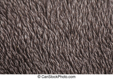 hairy brown carpeting
