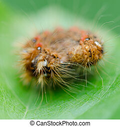 Hairy caterpillar on a leaf