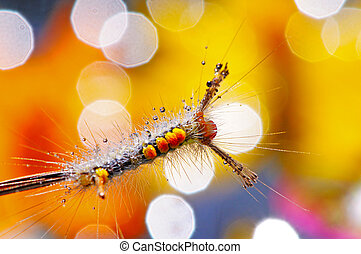 caterpillar - Hairy caterpillar on beautiful background