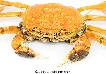 Hairy crab