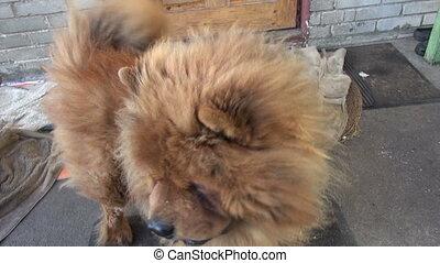 hairy funny dog near  door - hairy funny dog near house door