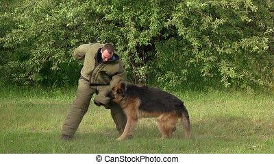 Hairy hound biting. Hairy hound cruelly biting man's sleeve,...