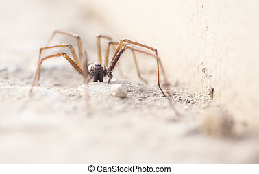Hairy scary spider