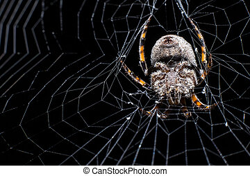Hairy spider and its web