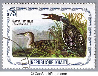 Common loon - HAITI - CIRCA 1975: A stamp printed in Haiti...