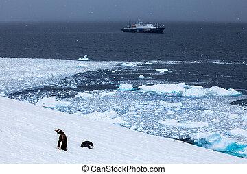 hajó, alatt, óceán, és, gentoo, pingvin, part