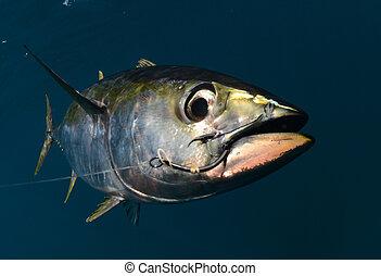 hak, tuńczyk, usta, jego, yellowfin