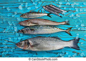 hake,  sardine,  seabass,  fish, anchois, frais, maquereau