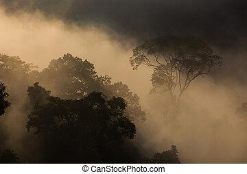 hala-bala, lumière, matin, (rainforest), narathiwas, paysage, vue