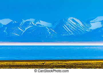 Hala Lake and snow capped Qilian mountain range ,Qinghai-Tibet Platea, China