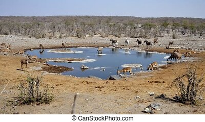 Halali Waterhole with Antelopes in Etosha NP