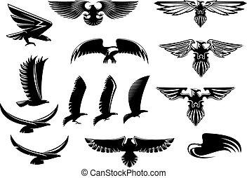 halcón, conjunto, halcón, águila, aves