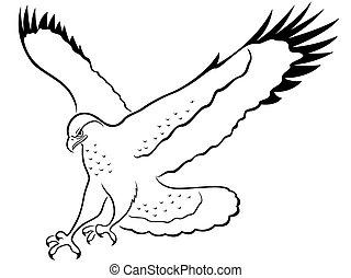 halcón, en, ataque