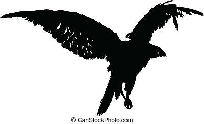 halcón, vector, -