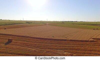 Hale Bales Lying On Fresh Cut Wheat Field
