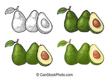 Half avocado with seed. Vector vintage engraving color