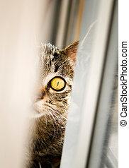 Half cat portrait