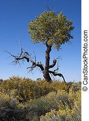 Half dead tree in the high desert under blue sky. - Yellow...