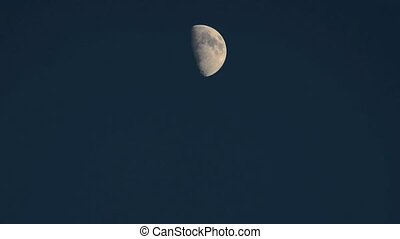 half maan