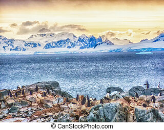 Half Moon Island Chinstrap penguins, Antarctica - Half Moon...